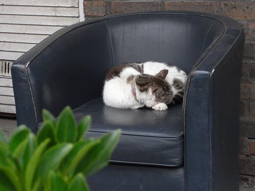 Cat Sleepin on a Sofa